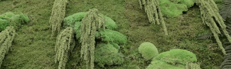 5 raisons pour ne pas installer un Mur Végétal stabilisé