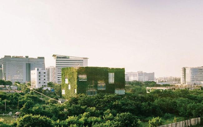 la-biophilie-espace-travail-avec-murs-vegetaux