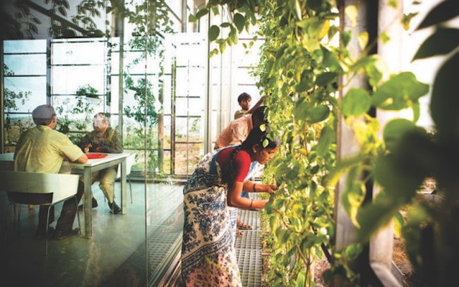 la-biophilie-espace-travail-plantes-bureau