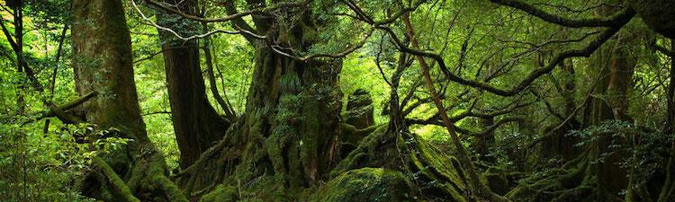 Science : Réflechir comme une Plante Verte
