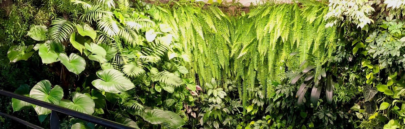 mur vegetal naturel