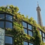 Économies d'énergie : le mur végétal, un atout insoupçonné
