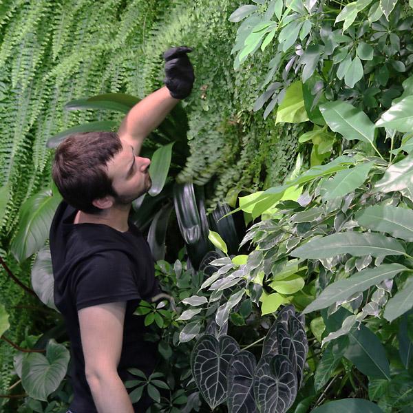 contrat de maintenance des plantes
