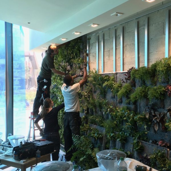 Opération d'installation d'un mur végétal
