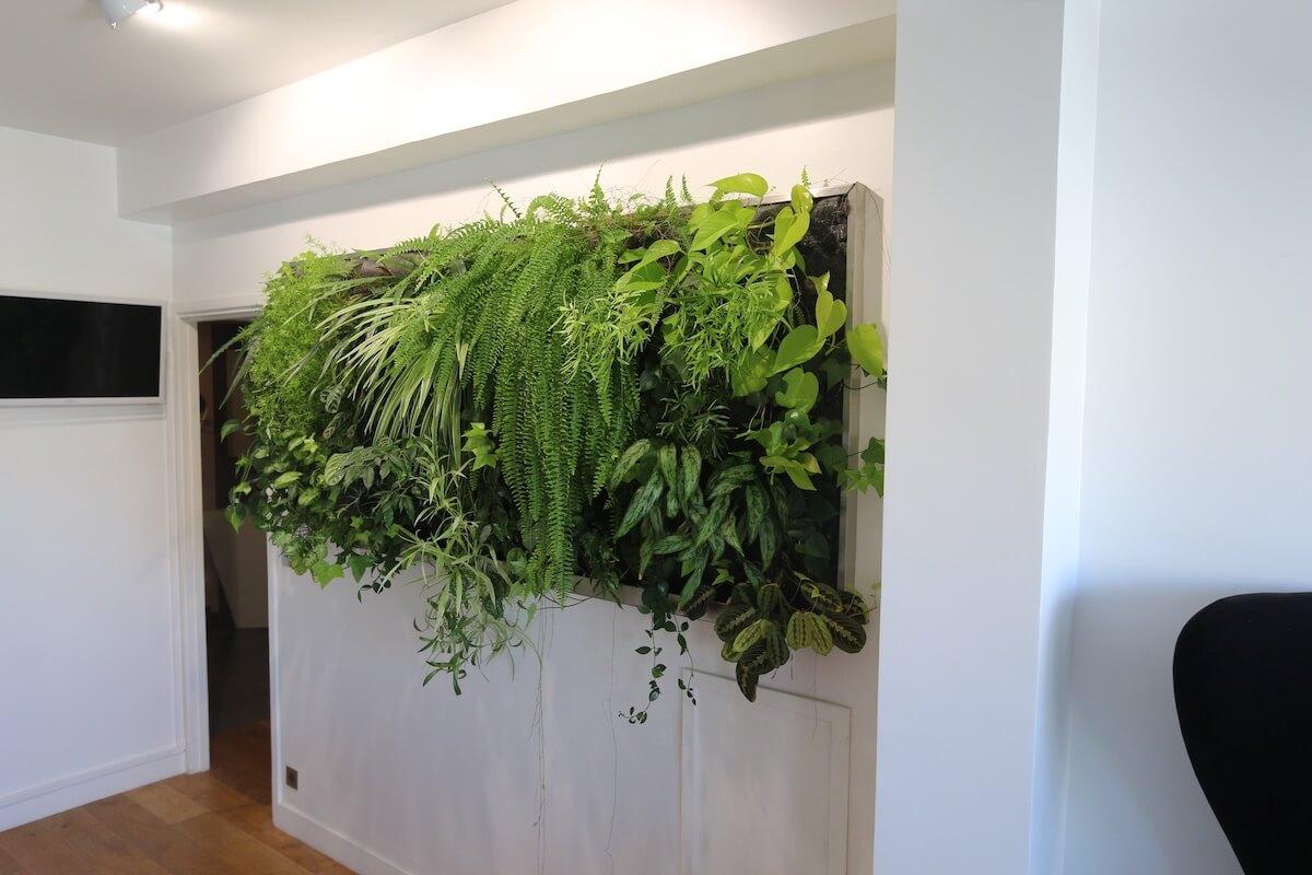Tableau végétal sur un mur blanc