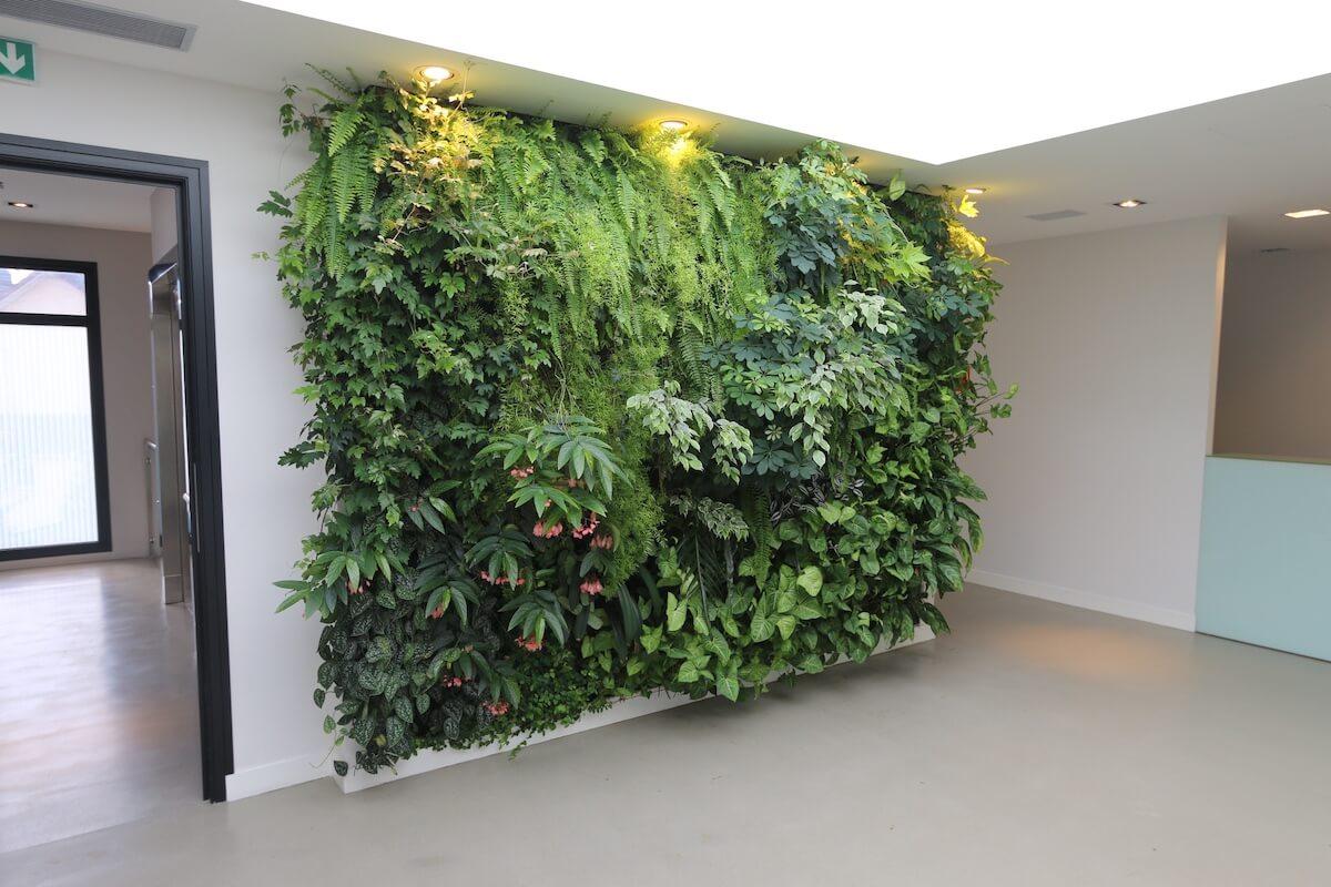 mur végétal dans une clinique à Ermont avec un éclairage naturel