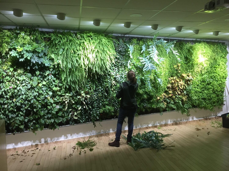 Entretien du mur végétal