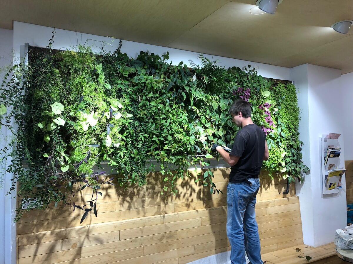 Mur végétal dans une école Montessori à Paris