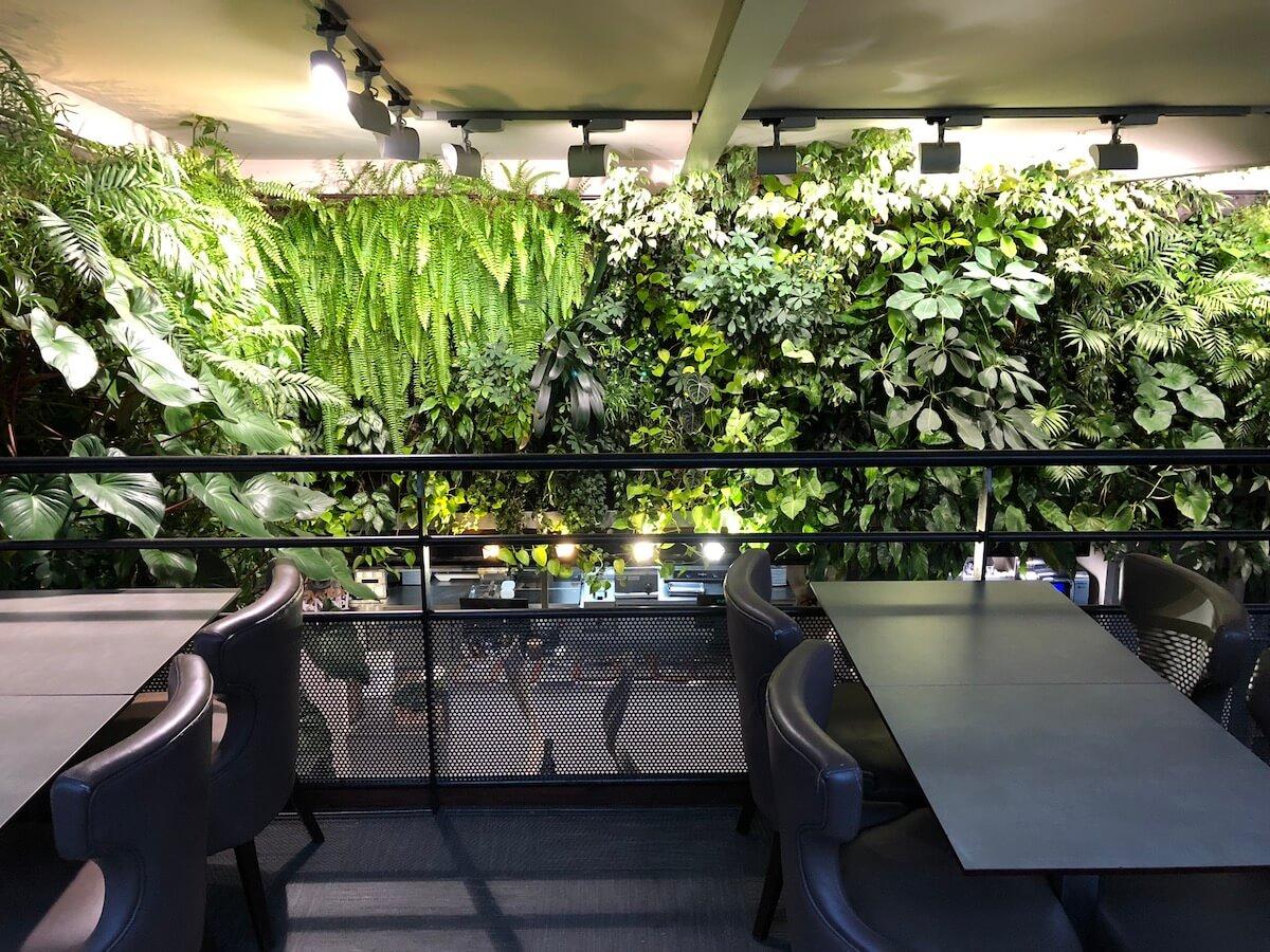 dans la canopée du mur végétal chez Oh Terroire
