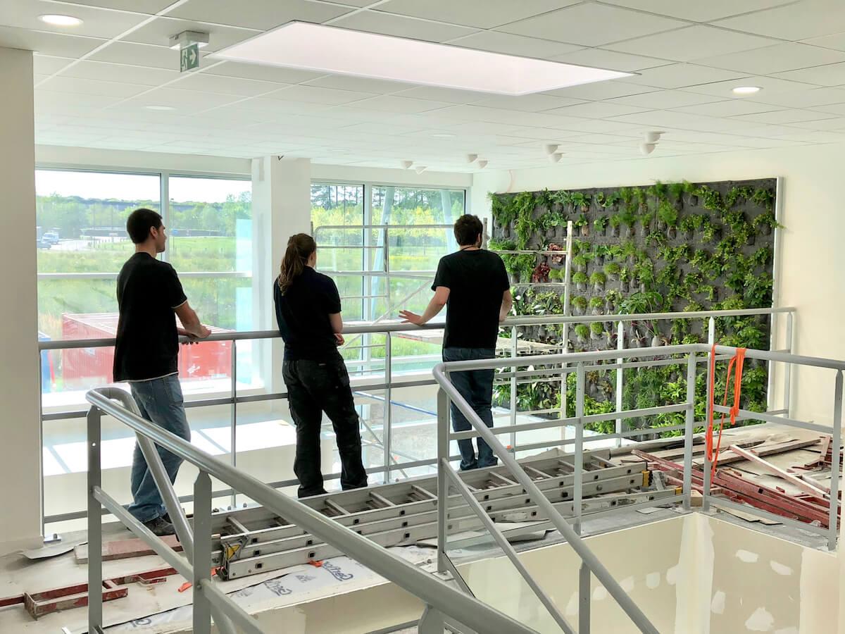 un mur végétal fraichement installé