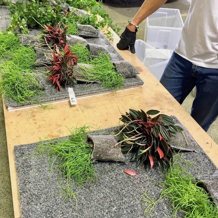 plantation en cours système plant-r