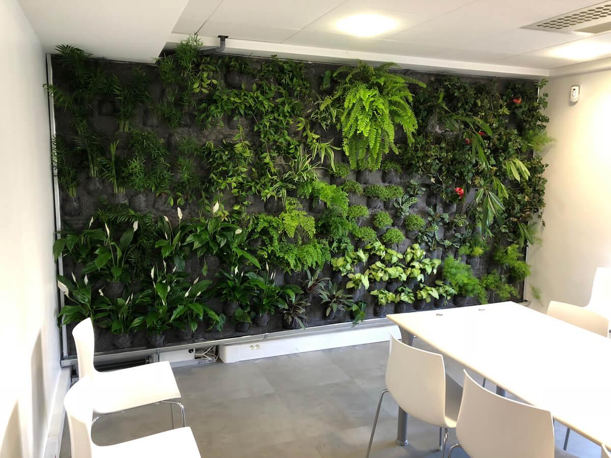 mur végétal récemment installé
