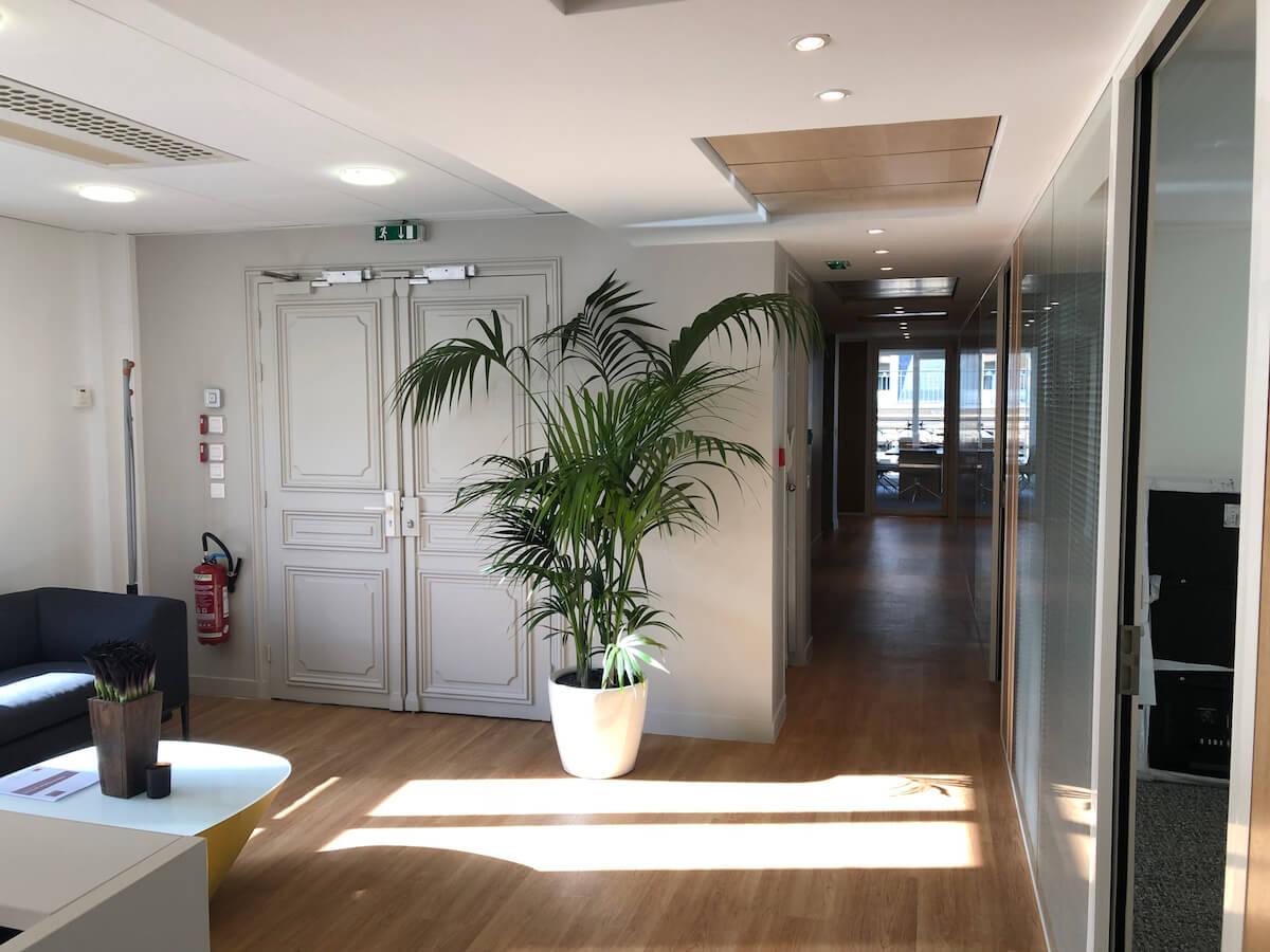 fourniture des plantes en pot pour la décoration intérieur