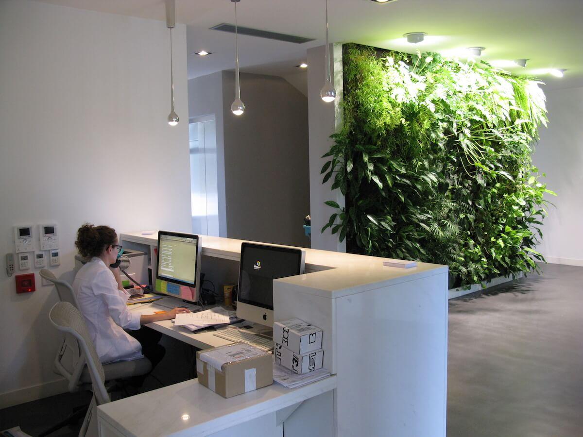 mur végétal inyérieur naturel à l'accueil de clinique dentaire