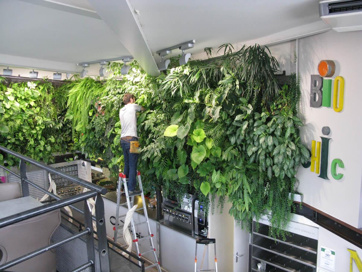 entretien d'un mur végétal à Orléans