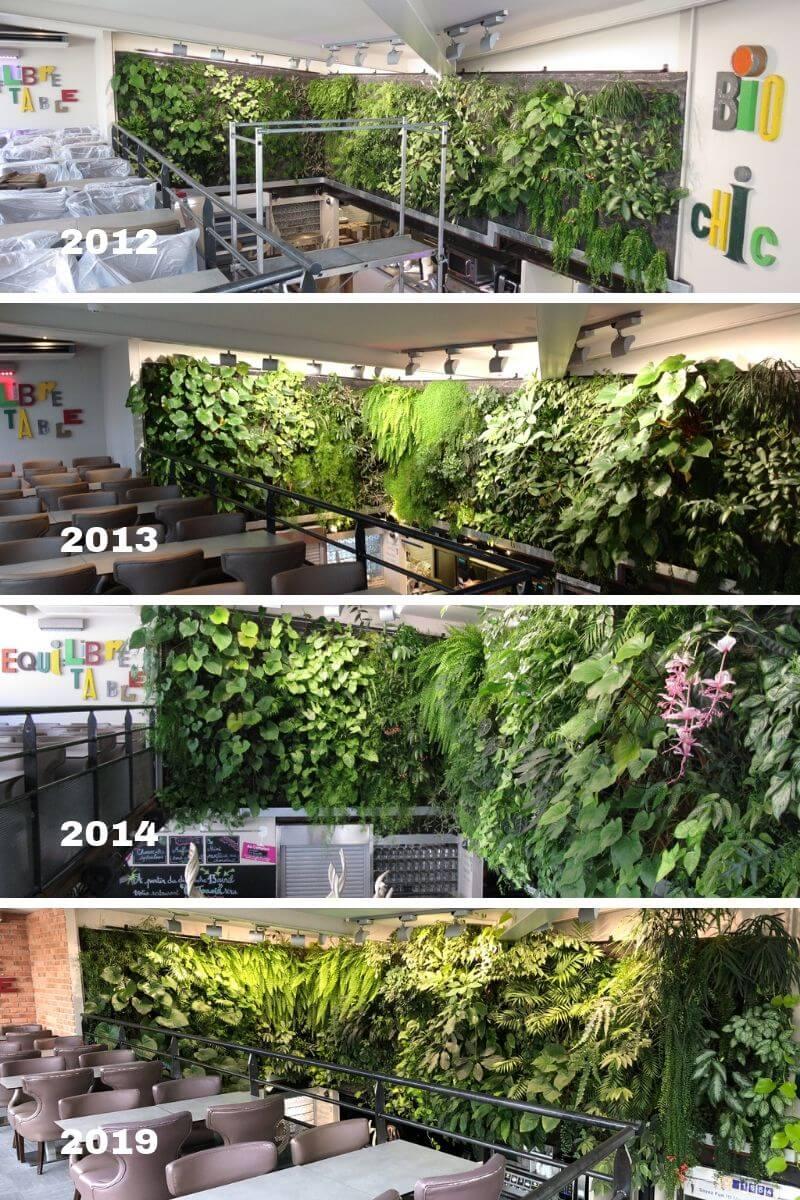 évolution d'un mur végétal de 7 ans d'age