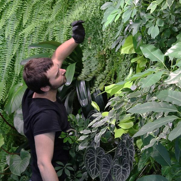 examen des plantes du mur végétal