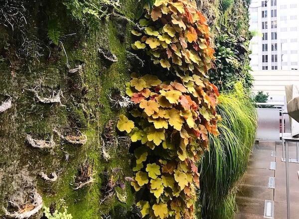 mur végétal naturel à problèmes