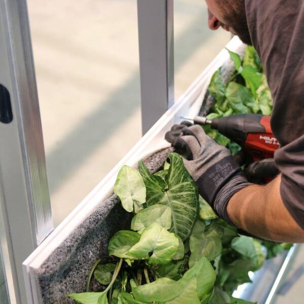 assemblage des panneaux de mur végétal