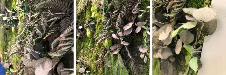 poussière sur un mur végétal