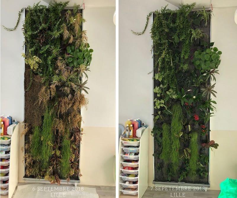 image avant-après l'intervention du spécialiste du mur végétal