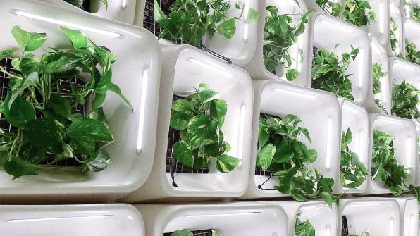 filtration d'air par mur vegetal dépolluant