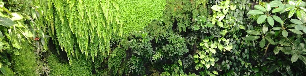 plantes de bien-être