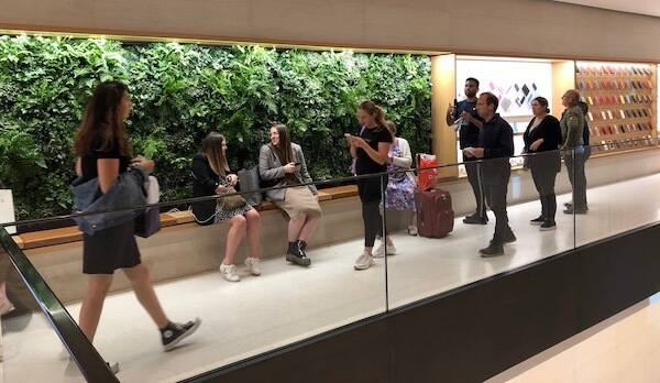mur végétaux pour le bien etre au travail