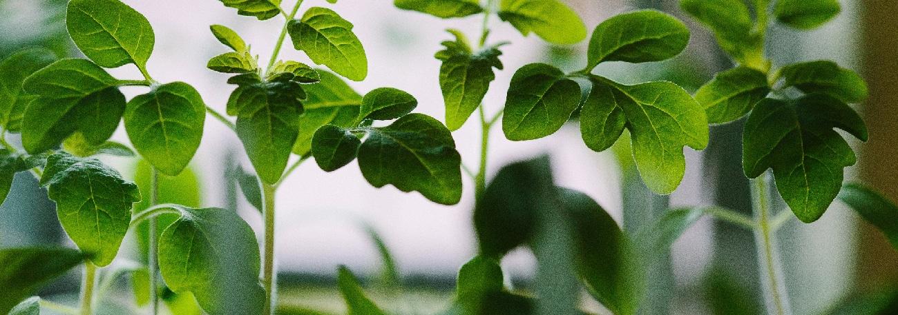 5 plantes dépolluantes idéales pour un mur végétal
