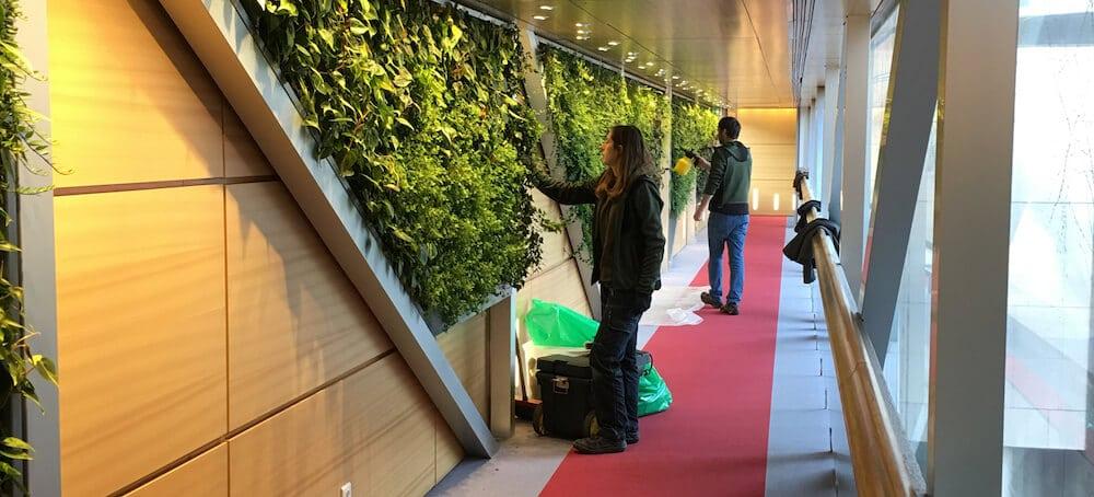equipe de specialiste d'entretien d'un mur vegetal
