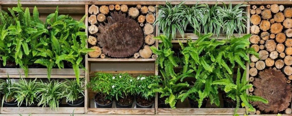 mur vegetal ecologique