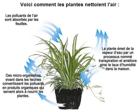 schema de fonctionnement d'une plante depolluante