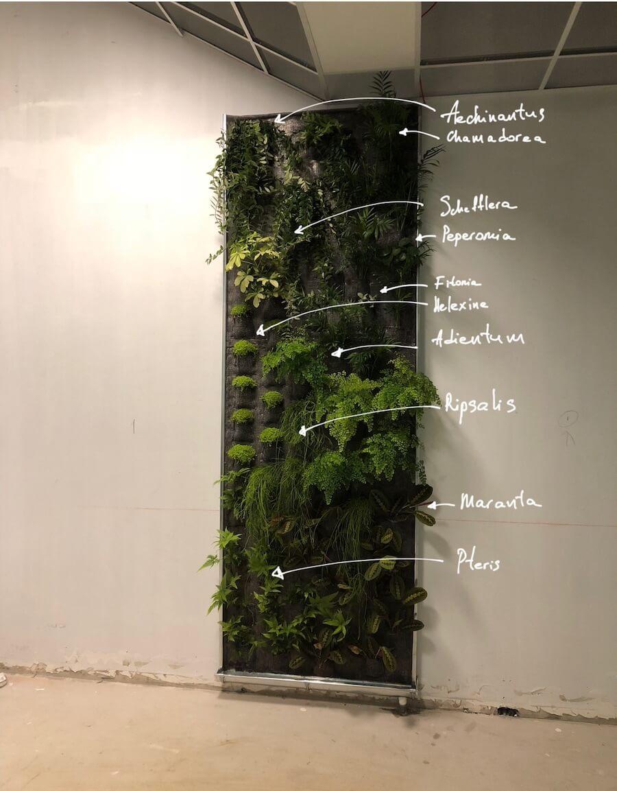 mur vegetal non toxique avec les annotations
