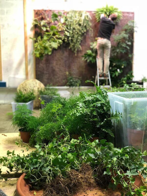 atelier du mur vegetal