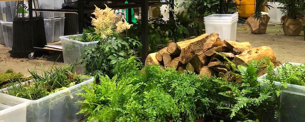 plantes de l'atelier mur vegetal