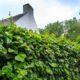 cloture vegetal comme dispositif anti bruit