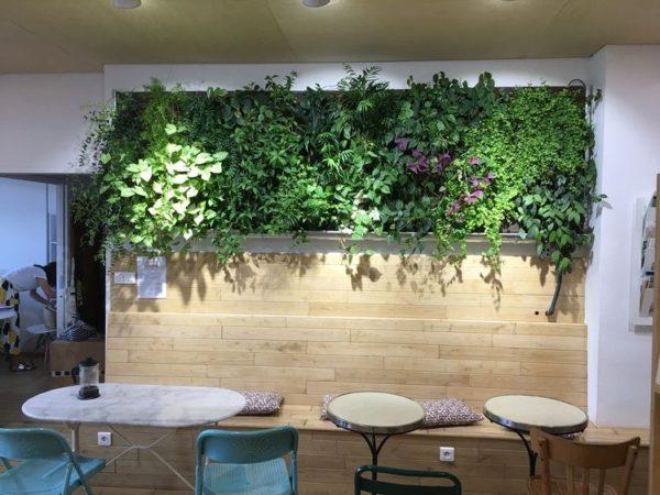 mur végétal dans une école