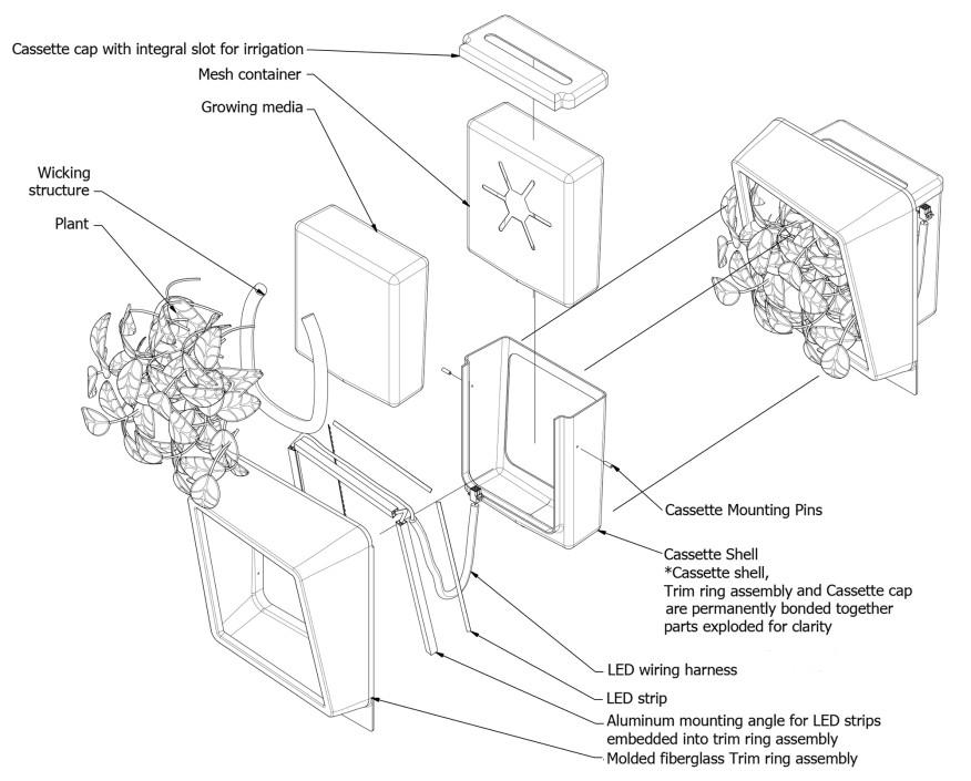 mechanisme de filtration d'air par les plantes