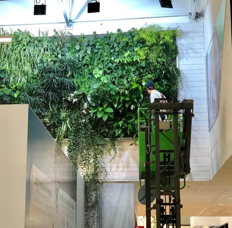entretien du mur végétala par un paysagiste professionnel