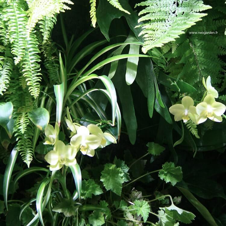 mur végétalisé avec des orchidées