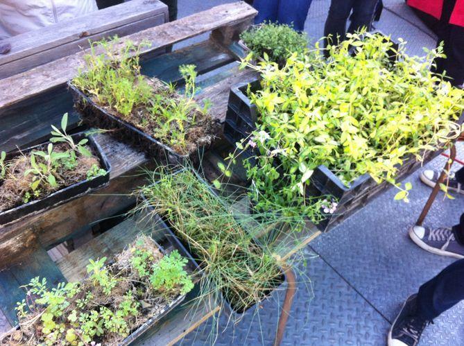 la plantes pour un mur végétal en palettes