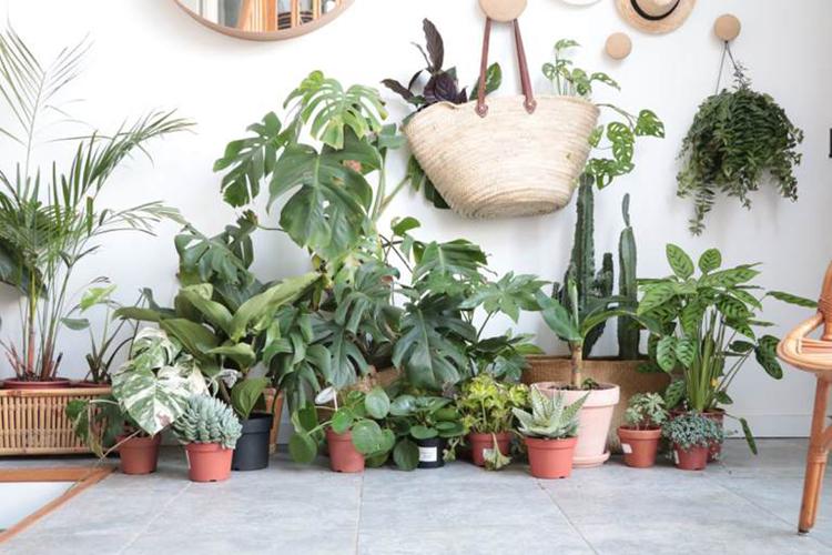 Petit jardin d'intérieur