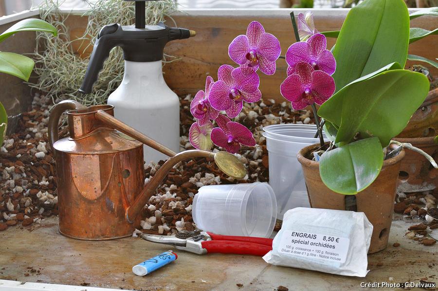 soigner une orchidée