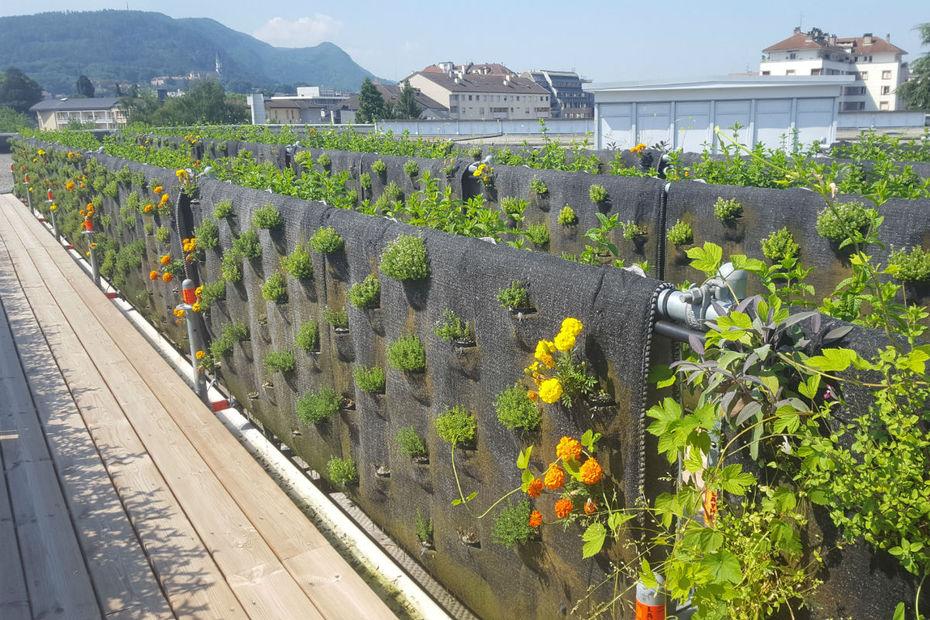 Jardin des plantes aromatiques sur le toit de Gallery Lafayette à Annecy