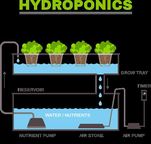 Hydroponie A Quoi Sert La Solution Nutritive La Fabrique Du Mur Vegetal