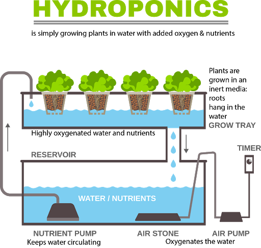 Schéma culture hydroponique