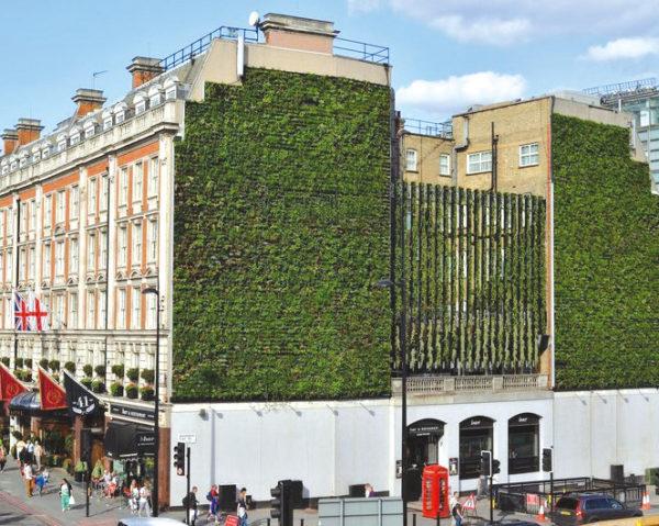 mur végétal hotel