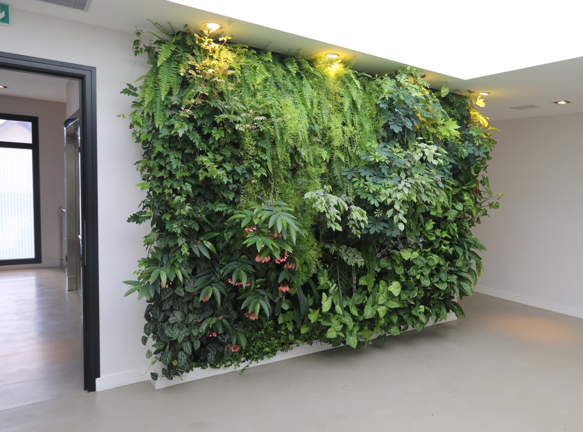 Mur Vegetal Plante Grasse décoration végétale d'intérieur : entre déco naturelle et