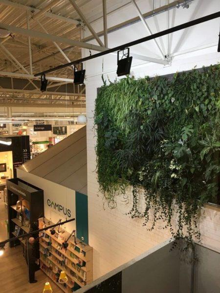 mur végétal dans un magasin Leroy Merlin