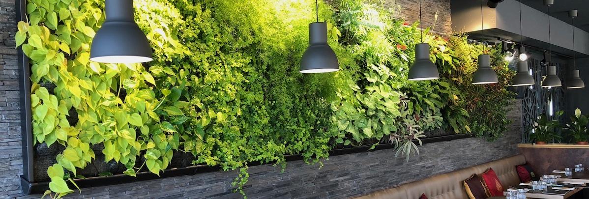 mur végétal que nous avons installé dans un restaurant à la vue des clients